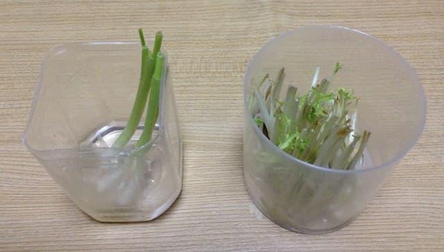 ネギ水耕栽培イメージ2
